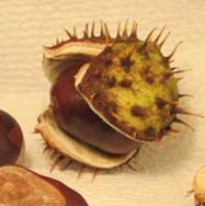 ChestnutShellGrnOpening