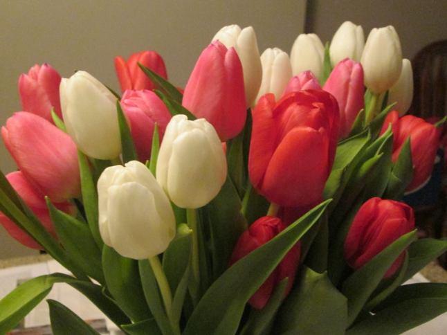 TulipsFeb