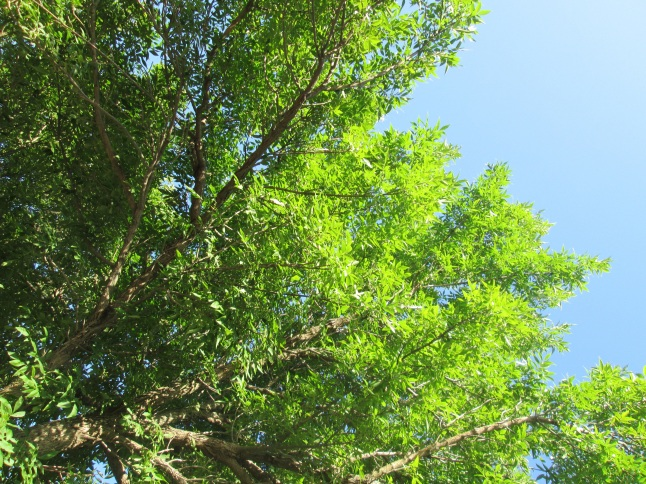 13BAliveTrees